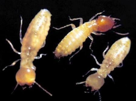 精鹰白蚁教您怎么预防白蚁
